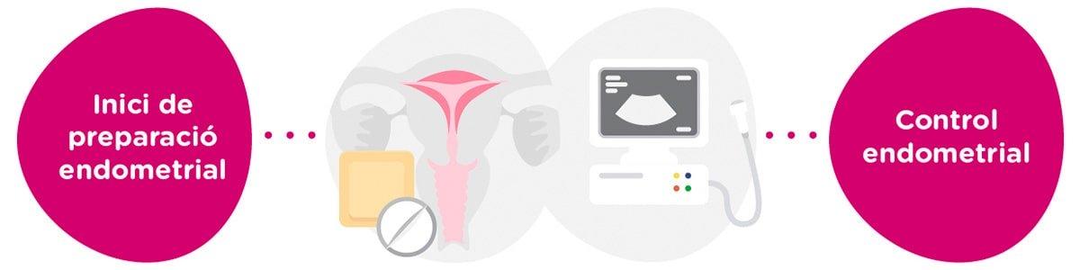 Preparació endometrial + controls ginecològics