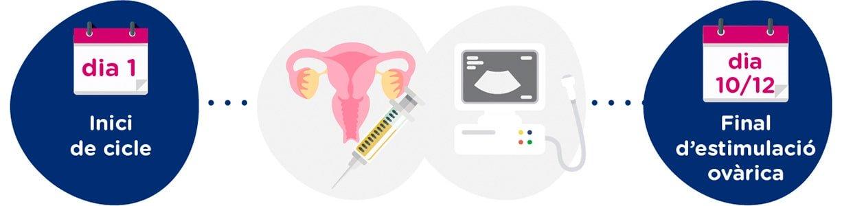 Estimulació ovàrica i controls ginecològics