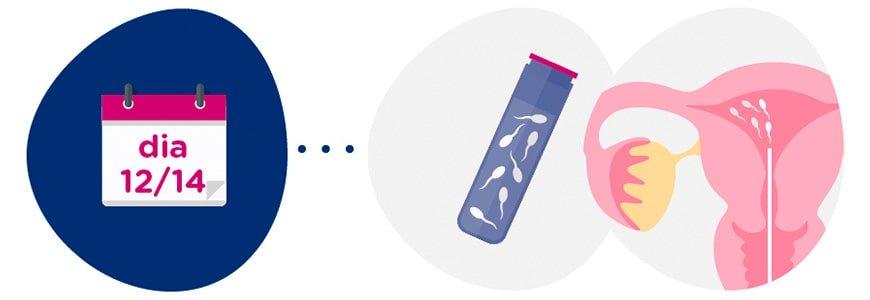 Preparació mostra de semen + inseminació