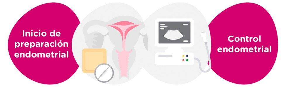 Preparación endometrial + controles ginecológicos