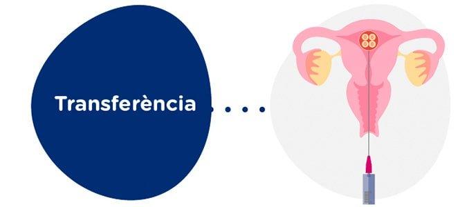 Transferència embrionària a la receptora