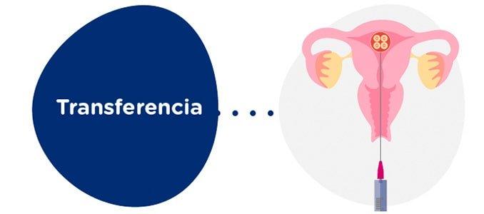 Transferencia embrionaria a la receptora