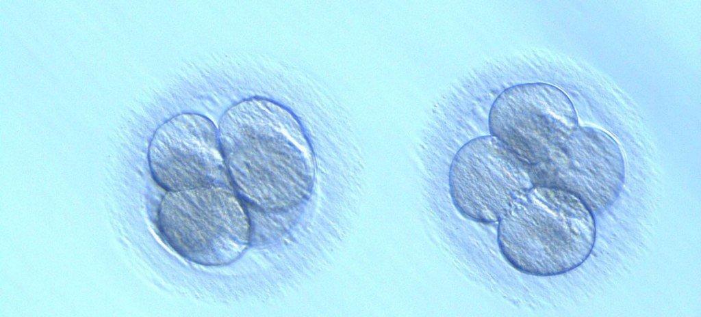 diagnostico-genetico-preimplantacional