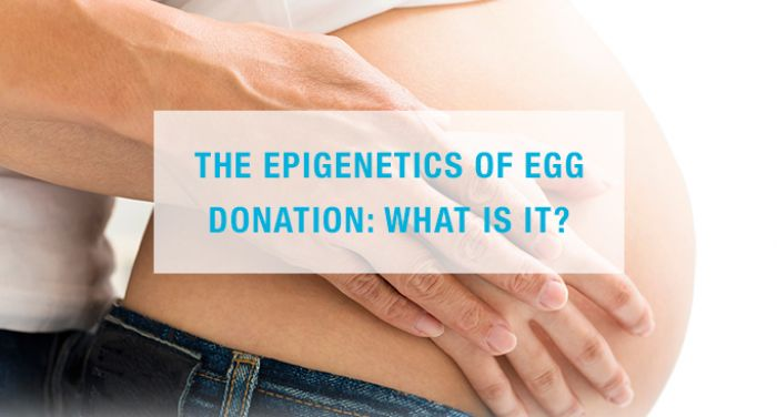 The epigenetics of egg donation: What is it?