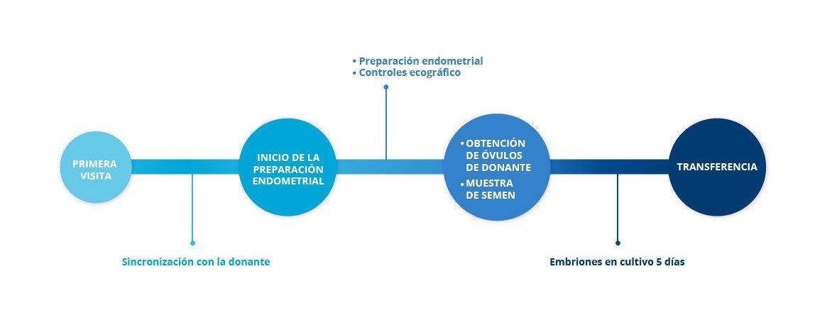 FIV Ovodonación - procedimiento